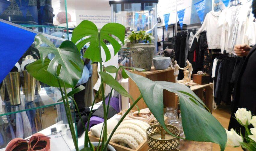 inside the Vision Foundation Portobello Road shop, a plant and clothing racks